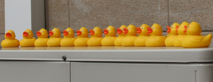 15 little ducks went out to play