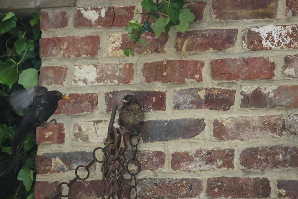 De vogels … nog maar eens